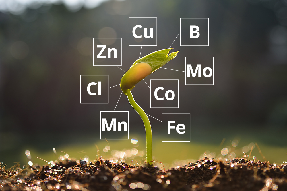 An introduction to micronutrients in crop production-part 1